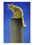 Pole Cat Giclee Print by Will Bullas