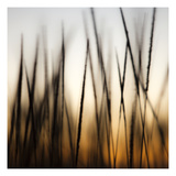 Grass Abstract 3 Photographic Print by Paul Edmondson