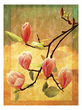 Magnolia Blossoms Posters by Doug Landreth