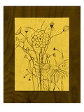 Wenge Wood Floral 2-Lemon Giclee Print by Kathleen McCarty