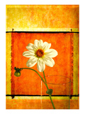 Daisy Photographic Print by Doug Landreth