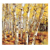 Aspen Grove Prints by Sarah Waldron