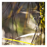 Grass Study 3 Photographic Print by Paul Edmondson