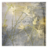 Cloud Larkspur 2 Photographic Print by Thea Schrack