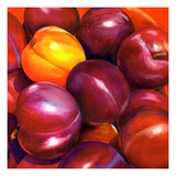 Plum Dandy Giclee Print by Terri Hill