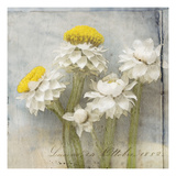 Winged Everlasting 1 Photographic Print by Thea Schrack