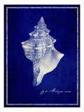 Conch Shell Photographic Print by  GI ArtLab