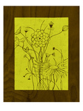 Wenge Wood Floral 2-Lime Giclee Print by Kathleen McCarty
