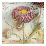 Purple Strawflower 1 Photographic Print by Thea Schrack