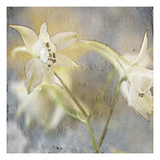 White Flower 1 Photographic Print by Thea Schrack