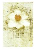 White Peony Photographic Print by Doug Landreth