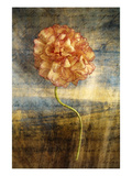 Steel Flower 4 Photographic Print by Thea Schrack