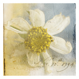 Cosmos 1 Photographic Print by Thea Schrack