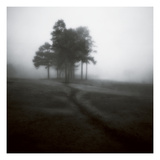 Fog Tree Study 1 Photographic Print by Jamie Cook