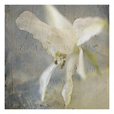 White Flower 4 Photographic Print by Thea Schrack