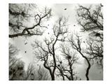 Crow Rookery Fotodruck von Jamie Cook