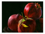 Four Pomegranates Giclee Print by Terri Hill