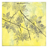 Fluttering Maple I Prints by Jennifer Goldberger