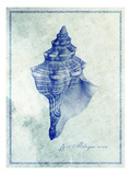 Conch Shell B Photographic Print by  GI ArtLab