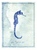Seahorse B Photographic Print by  GI ArtLab