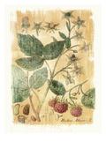 Rubus Jdaeus Art by Thea Schrack