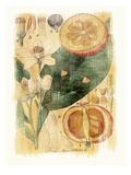 Citrus Aurantium Prints by Thea Schrack