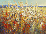 Field of Spring Flowers II Premium Giclee Print by Tim O'toole