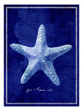 Starfish Photographic Print by  GI ArtLab