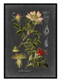 Midnight Botanical I Prints by  Vision Studio