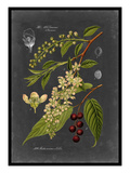 Midnight Botanical II Poster by  Vision Studio