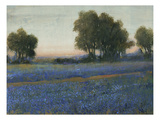 Blue Bonnet Field II Giclee Print by Tim O'toole