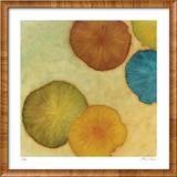 Sienna Lake 1 Limited Edition Framed Print by Lynn Basa