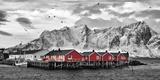 Lofoten Nähe Reine mit roten Hütten Plakater af Rolf Fischer