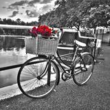 Rosas románticas I Arte por Assaf Frank