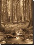 Forest Moss Stretched Canvas Print by Yanni Theodorou
