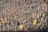Sept Treeline Leinwand von Dale MacMillan