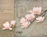 Magnolias Prints by Lynnea Washburn