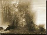 Elder Forest Stretched Canvas Print by Yanni Theodorou