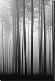 Fog and Pines IV Stretched Canvas Print by John Bartosik