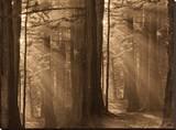Forests II Reproduction transférée sur toile par Yanni Theodorou