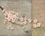 Ciliegi in fiore Poster di Lynnea Washburn