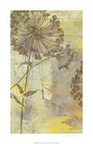 Dandelion Dance I Limited Edition by Jennifer Goldberger