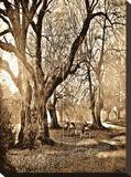 Forests I Stretched Canvas Print by Yanni Theodorou