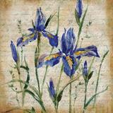 Poetic Garden IV Prints by Paul Brent