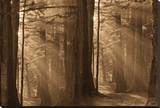 Forests II Stretched Canvas Print by Yanni Theodorou