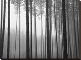 Fog and Pines I Stretched Canvas Print by John Bartosik