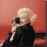 Marilyns Puppy Reproduction transférée sur toile