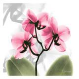 Orchid Pink Posters by Albert Koetsier
