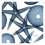 Starfish Trip 2 Print by Albert Koetsier