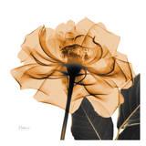 Copper Rose Posters by Albert Koetsier